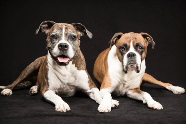 Boxers in the studio 1