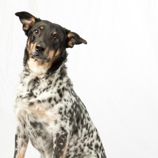 FredLevy_PetPhoto_dog-1