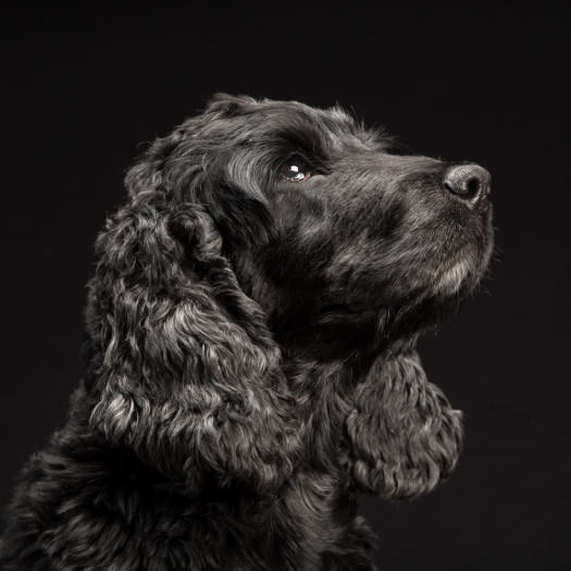 Fred-Levy-Photography-black-Dogs-2
