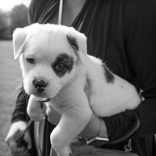 puppy-Fred-Levy-Photography-NC-1