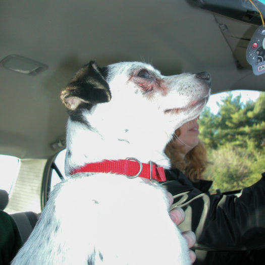 Toby heading home from the shelter. 11-2003