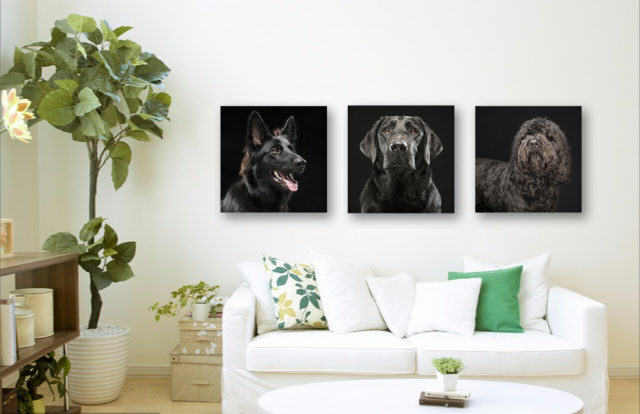 black dogs photos display