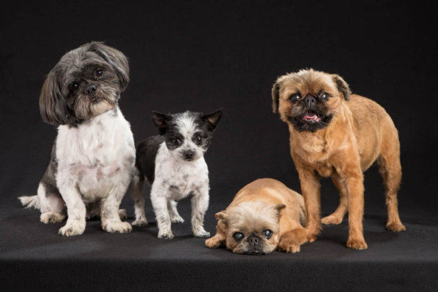 pet-photo-in-studio-special-3