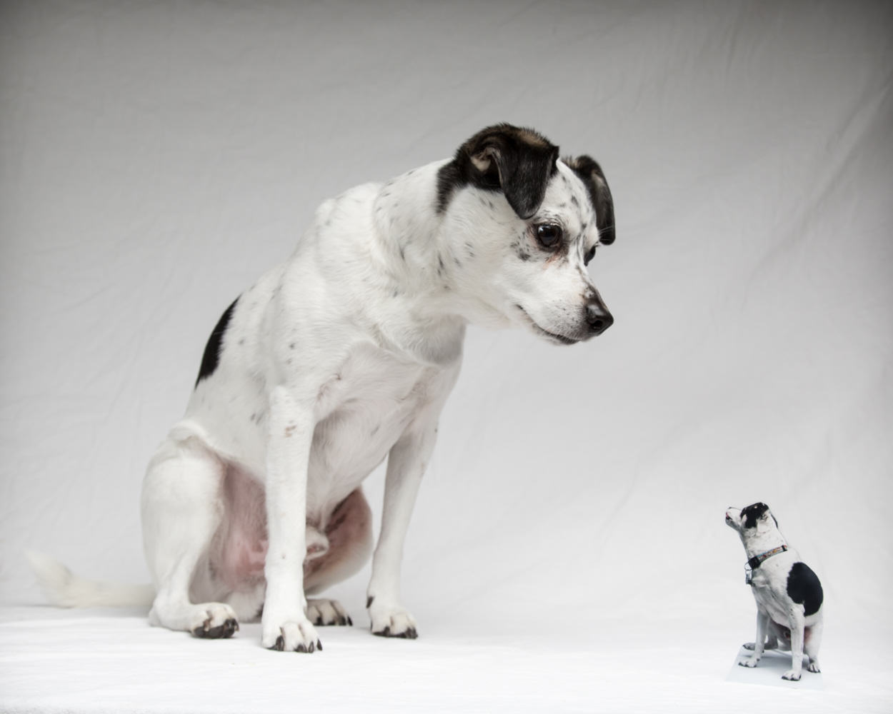 Photo of Toby dog with a cutout of toby in the studio