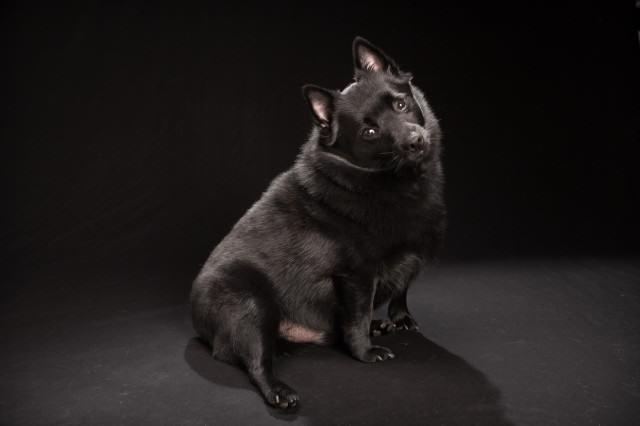 blackdogday