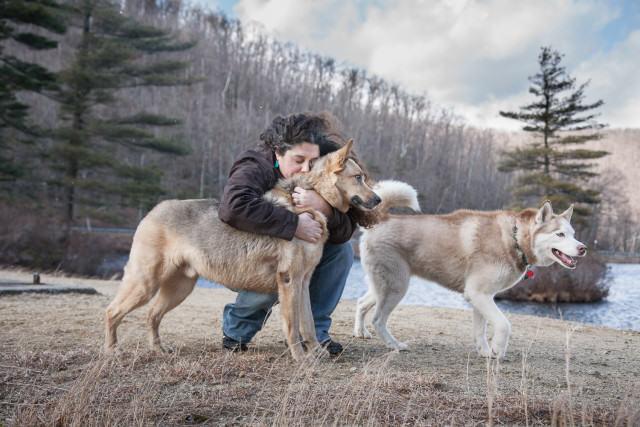 German Shepherd and Huskie