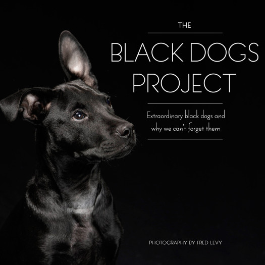 black dogs project book