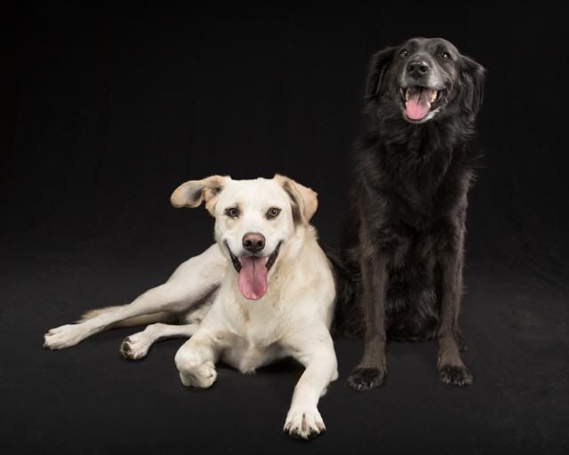 Shelby and Cody studio photo