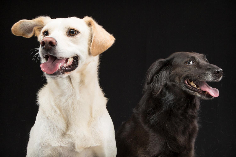 dogs, studio, photography