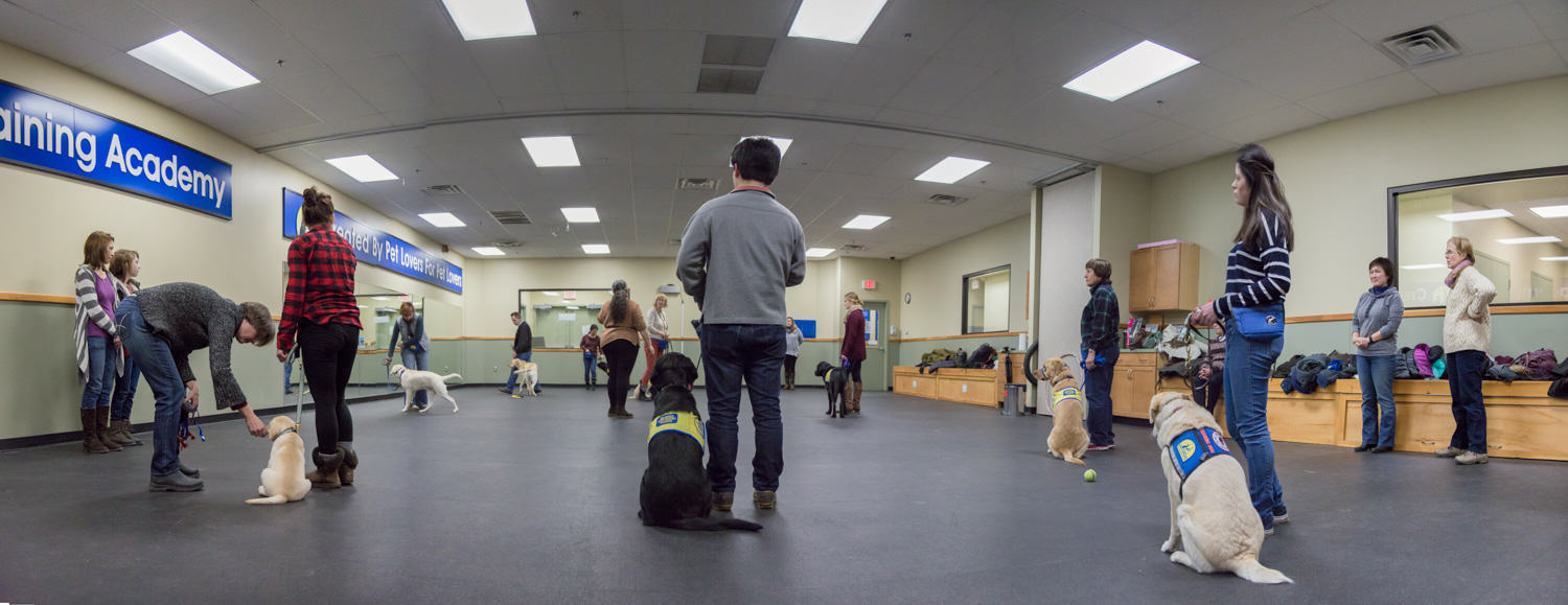 service dogs being trained