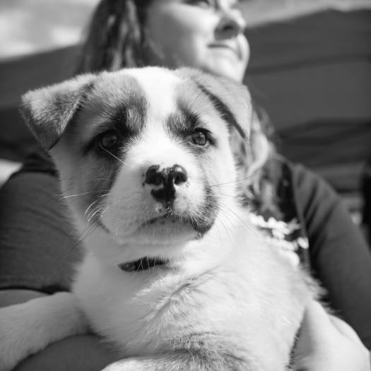 puppy-Fred-Levy-Photography-NC-2