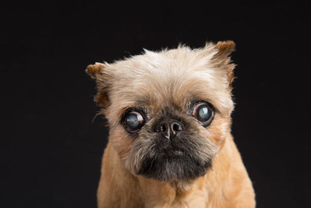 four-dogs-Fred-Levy-photography-3