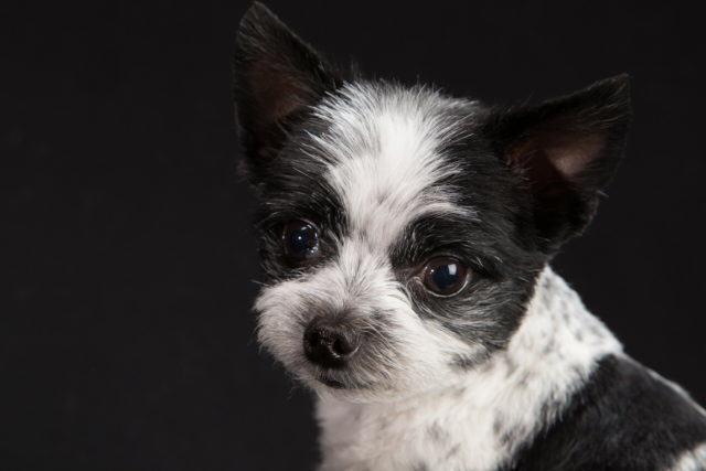 four-dogs-Fred-Levy-photography-4