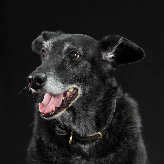 Black dog, studio