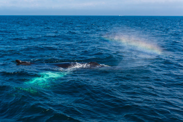 whalewatch-fred-levy-photo-4