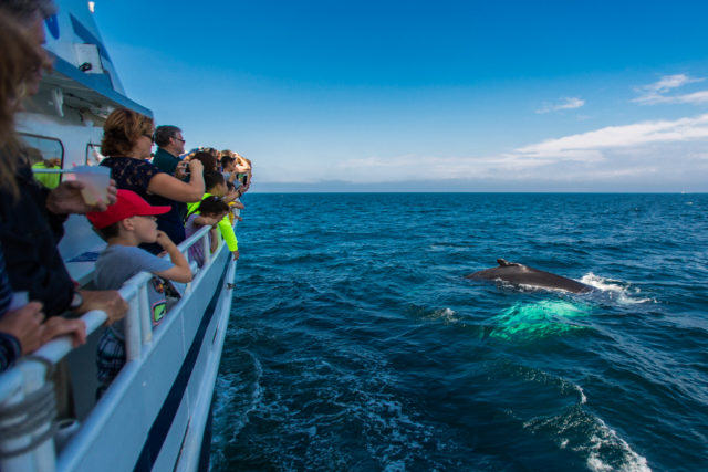 whalewatch-fred-levy-photo-5