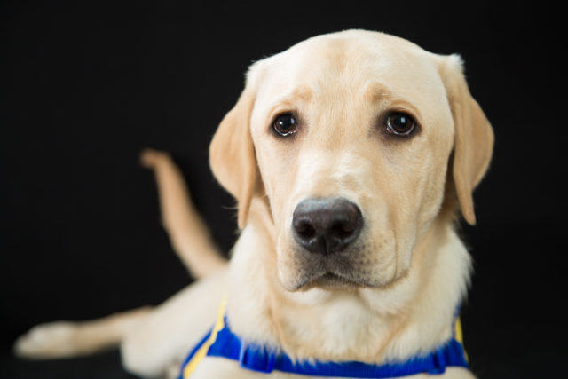 photo shoot of service dog