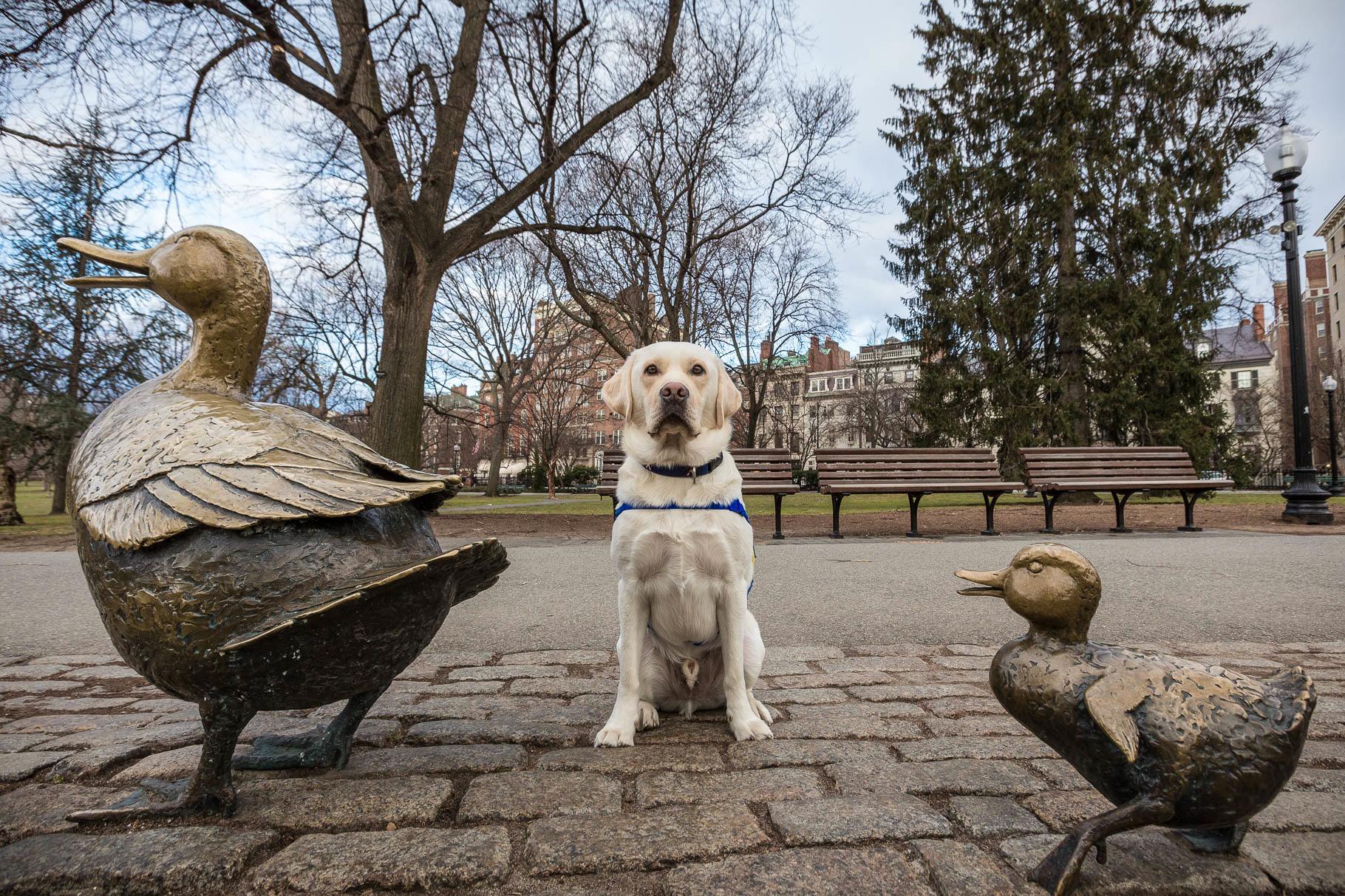 Boston Make Way for Ducklings